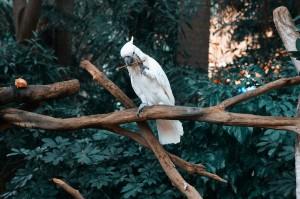 Kakadu Ernaehrung