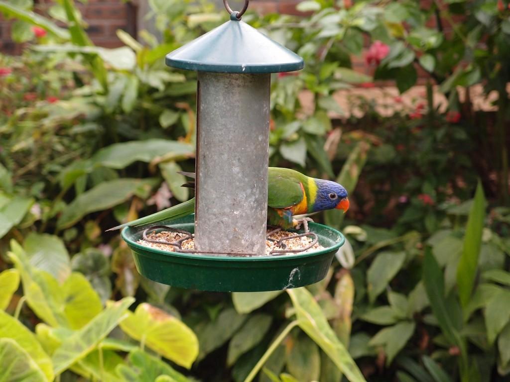 Papagei Obst und Gemuese
