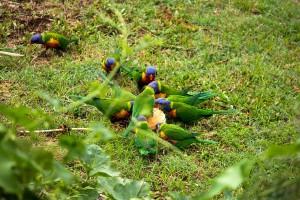 Papageien Ernaehrung