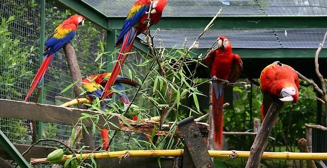 Volieren für Papageien – das sollte man beachten!