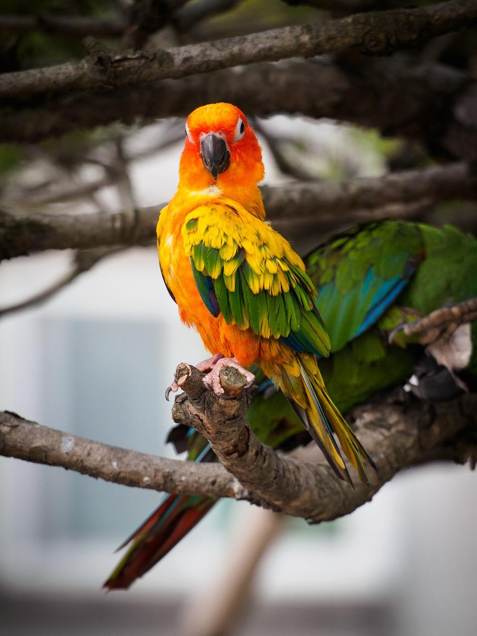 Papageien auf einem Ast