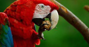 Amazonien - Das Land der Papageien