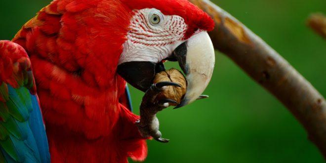 Amazonien – das Land der Papageien